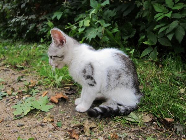 Kattekilling fundet i Åbyhøj